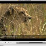 Install Miro on Ubuntu