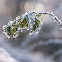 sarah_muenz__winter_wonderland__4k